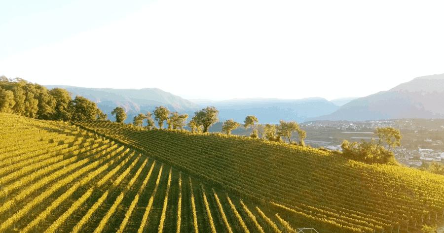 Der Weinberg von Schloss Englar - Club Winery Südtirol