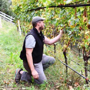 Matthias Rielinger bei den Rebstöcken im Weinberg am Rielingerhof - Club Winery