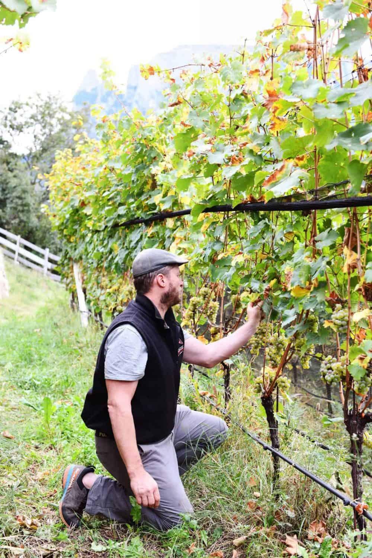 Matthias Rielinger im Weinberg am Rielingerhof - Club Winery