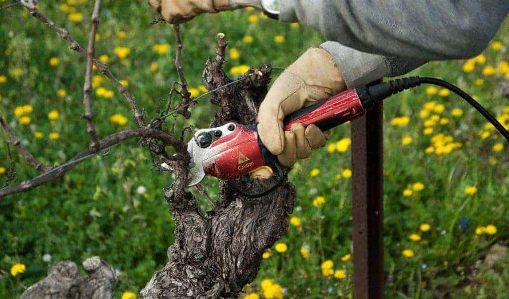 Wein- & Winzerkurs mit Club Winery