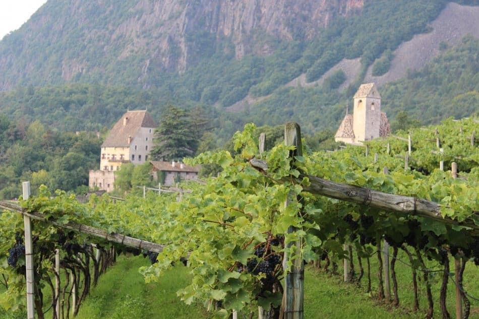 Rebstock mieten am Weingut Schloss Englar - Club Winery Südtirol