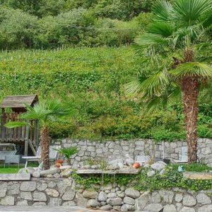 Rebstockpatenschaft mit Besuch am Weingut - Spitalerhof Klausen - Club Winery Südtirol