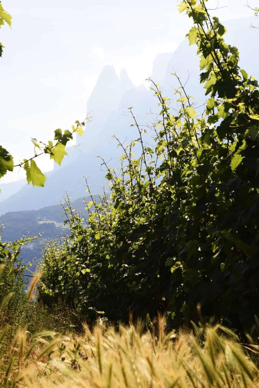 Rielingerhof mit Aussicht auf Schlern - Club Winery Südtirol