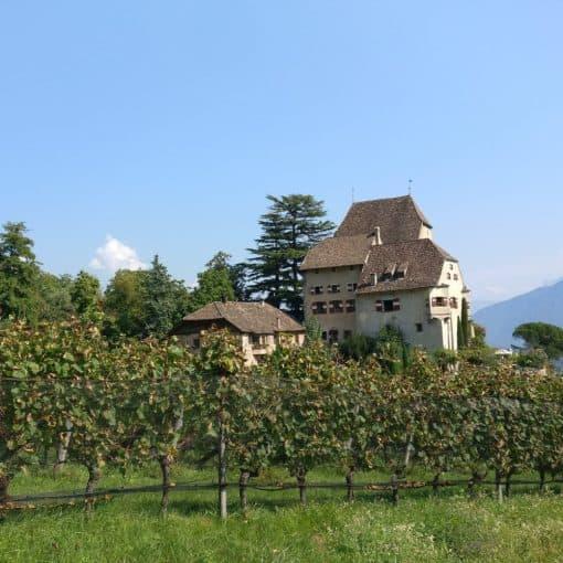 Schloss Englar - Rebstockpate werden