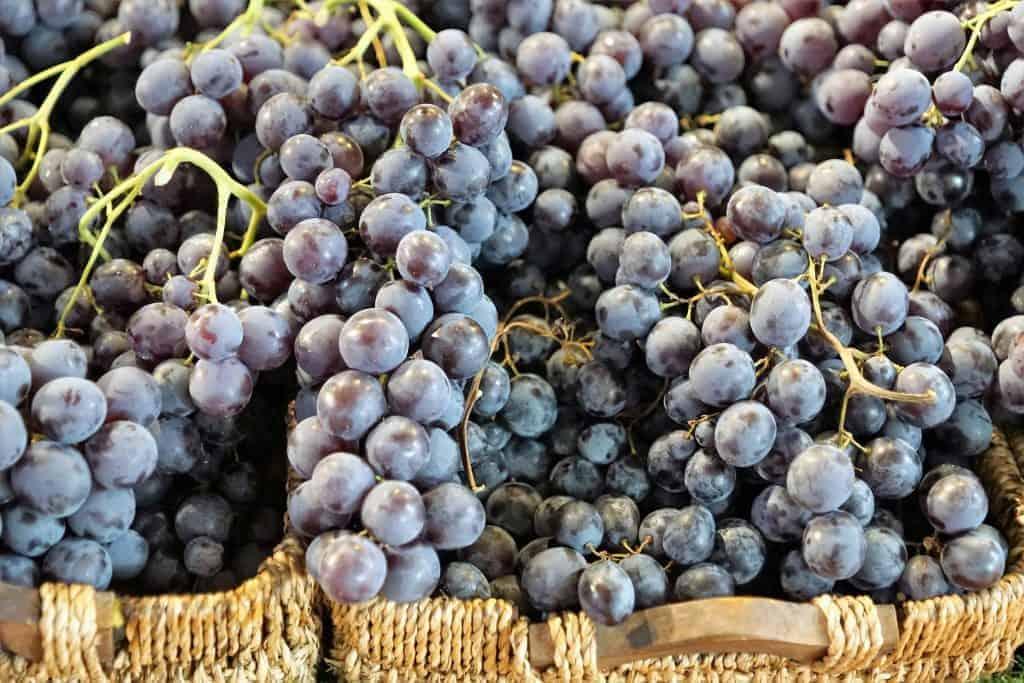 Trauben im Korb - Club Winery