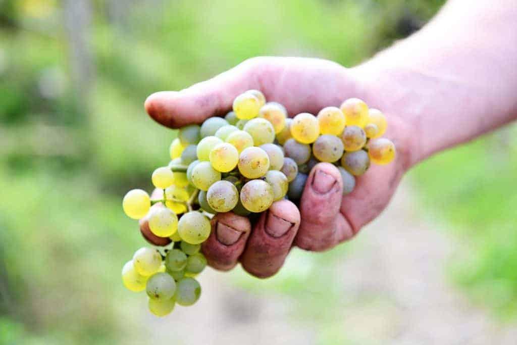 Wein aus Südtirol kaufen - Rielingerhof - Club Winery