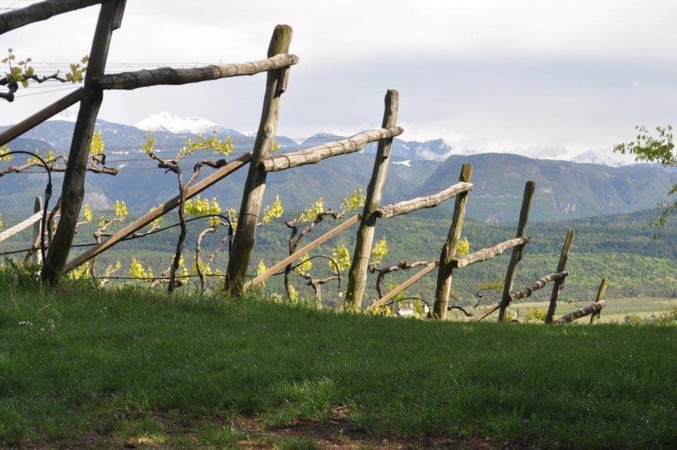 Weinberg von Schloss Englar mit Aussicht bis zu den Dolomiten - Club Winery Südtirol