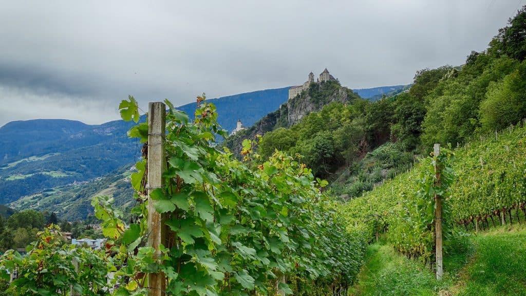 Weinerlebnis als Geschenk mit Club Winery Südtirol - Weingut mit Aussicht am Spitalerhof