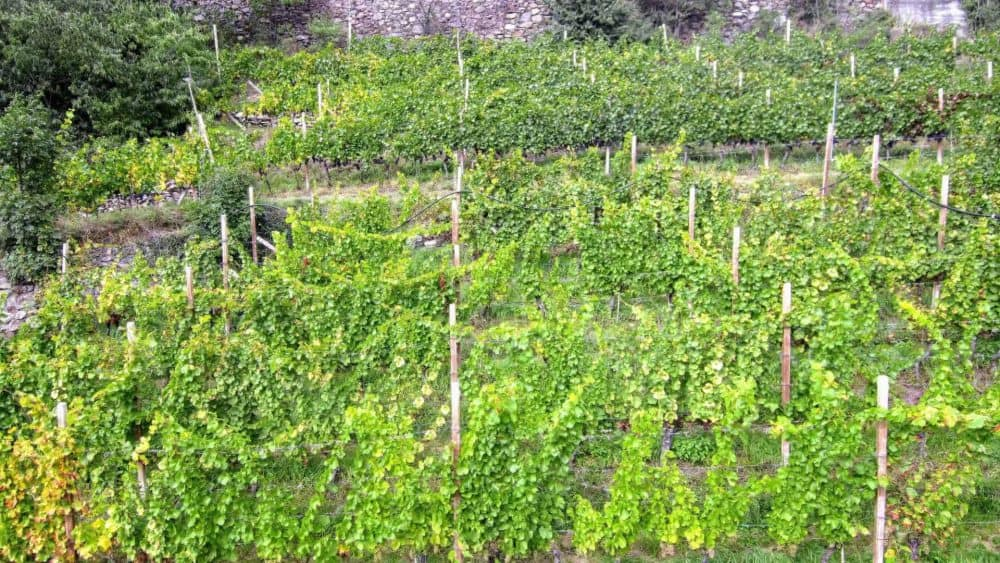 Weingut Spitalerhof in Südtirol besuchen Club Winery