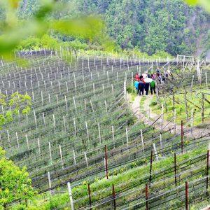 Weingut besichtigen - Rielingerhof - Club Winery Südtirol