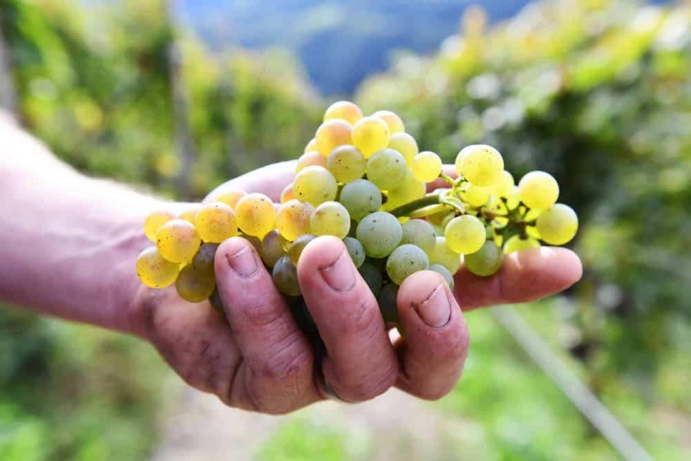 Weinpatenschaft aus Südtiro - Rielingerhof - Club Winery