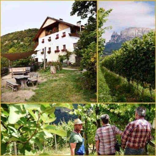 Weinpatenschaft mit Club Winery - Rielingerhof Südtirol