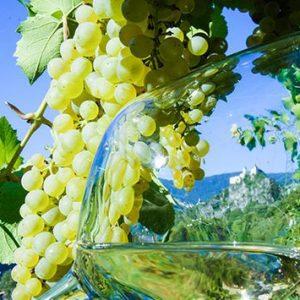 Weinurlaub und Weinverkostung in Südtirol Spitalerhof