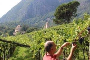 Winzer Graf Khuen-Belasi bei der Arbeit am Weingut - Club Winery Südtirol